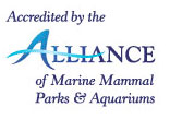 Accredited by the Alliance of Marine Mammal Parks and Aquariums