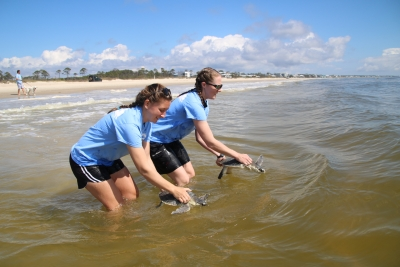 Photo for Gulfarium C.A.R.E. Center Releases Eight Cold-Stunned Sea Turtles