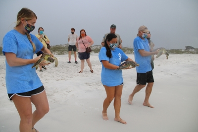 Photo for Rehabilitated Sea Turtles Successfully Released