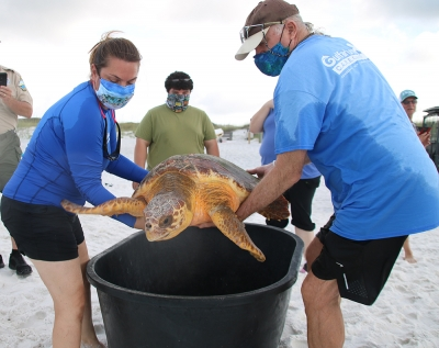 Photo for Six Rehabilitated Sea Turtles Successfully Released By Gulfarium C.A.R.E. Center