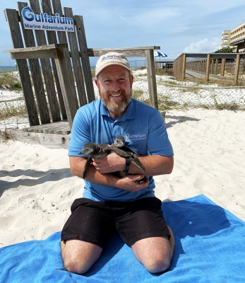 Photo for Two African Penguin Chicks Hatch at Gulfarium