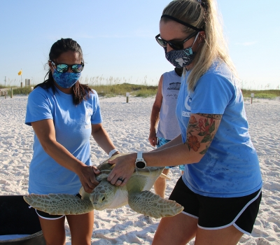 Photo for C.A.R.E. Center Successfully Released Three Rehabilitated Sea Turtles